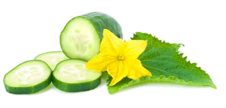 Cucumber  leaf and flower. This file is cleaned, retouched and contains  .