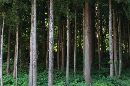 Woods 写真素材