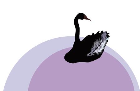 Black swan. Vector illustration. Vector