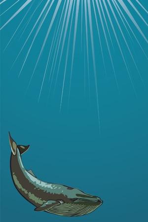 orificio nasal: Ballenas nadando bajo el agua. Ilustraci�n vectorial. Vectores