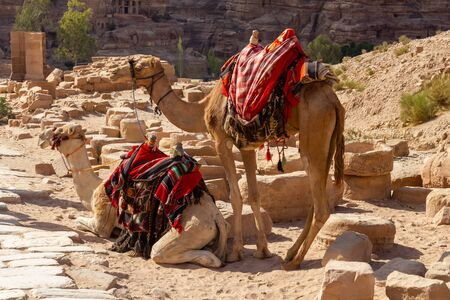 Two camels with beautiful red blankets waiting in the sun for tourists to ride them through Petra Foto de archivo