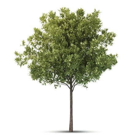 Hi resolutie mooie boom soleerde afbeelding