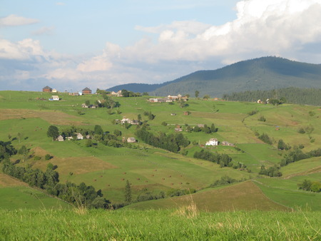 Green populated landscape