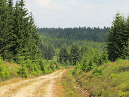 wooded path: The wooded landscape with a path Stock Photo