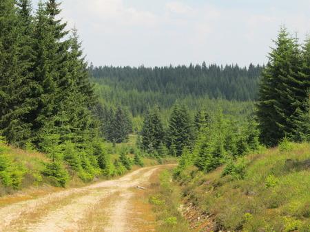 The wooded landscape with a path Reklamní fotografie