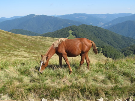 Horse on pasture in the hills
