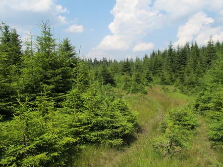 The wooded landscape Reklamní fotografie