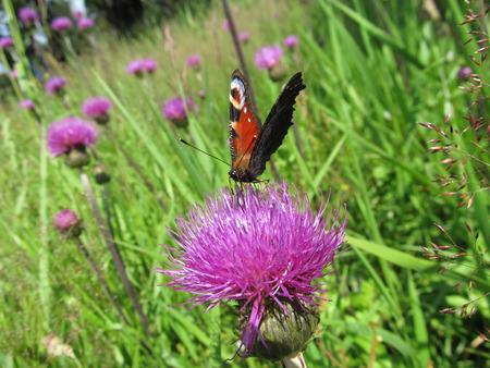 A butterfly sucking nectar from flower Reklamní fotografie