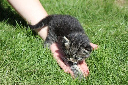 Kitten outside for the first time