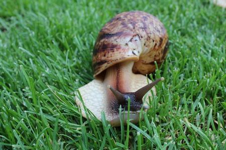 Giant snail Reklamní fotografie - 28553672