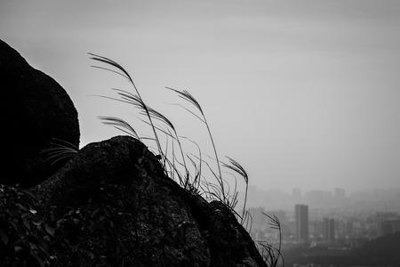 adversity: hillside