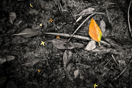 yellow leaf on the mud Stock Photo