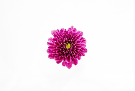 violet flower isolated on white background Stock Photo
