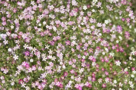 mini flora Stock Photo