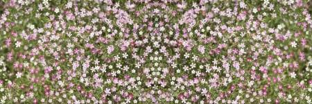 mini flower blossom background