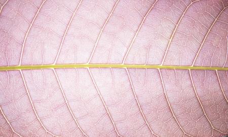 violet leaf texture Stock Photo