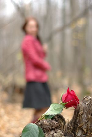 Red rose and a girl in the background photo