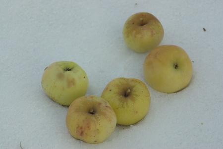 Apples on snow Stock Photo