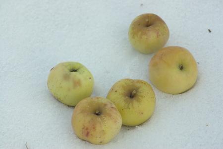 Five yellow apples on snow Stock Photo