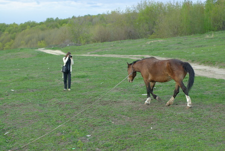Female making a shot of a horse on the meadow Stock Photo