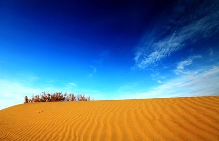 liu: Desert Stock Photo