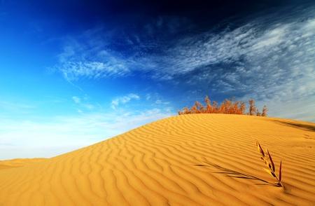 desierto: Desierto