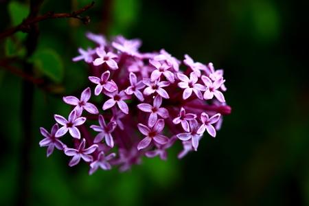 clove plant: Flower