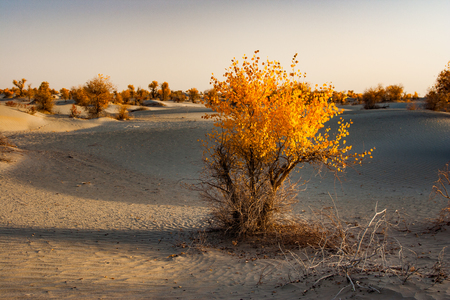 xinjiang: Landscape scenery view of a desert during autumn