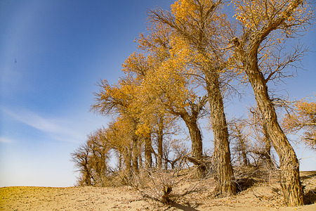 xinjiang: Paysage du désert du xinjiang