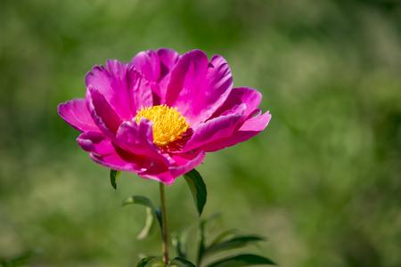 Flower blooming Banco de Imagens