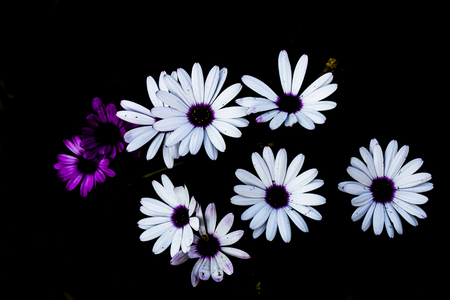 Flower on dark background Banco de Imagens