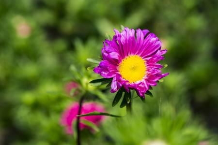 Flower close up view Banco de Imagens
