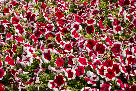 Flower bed Banco de Imagens