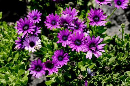 Close up to purple flower Banco de Imagens