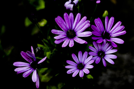 Close up view of purple flower