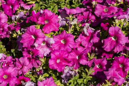Close up to pink flower Banco de Imagens