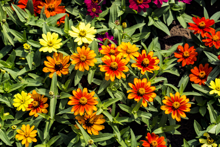 Flower field close up view Banco de Imagens