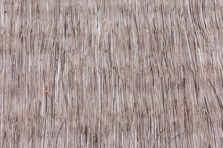 thatch: Hay roof texture