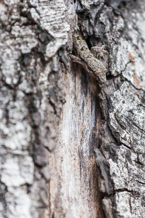 lizard in field: lizard hiding on the trunk of a tree.