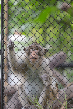 locked up in a cage: Monkey climbing in the cage Stock Photo