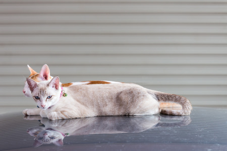 domestic garage: A beautiful cat sitting on the car roof in the garage and look at you.
