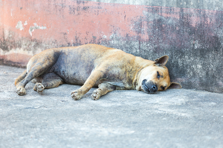 mangy: Mangy dog sleeping on the road. Stock Photo