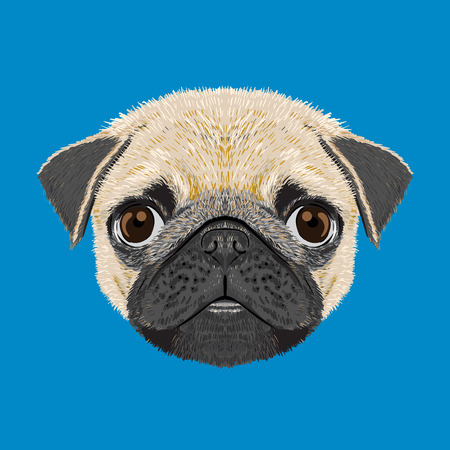 pug dog: pug dog illustration drawings