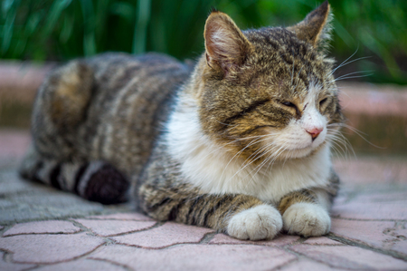 cat sitting on the tile in the garden with grass on background. Stock Photo