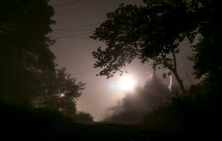 Foggy street lights misty with night deserted road and trees Stock Photo