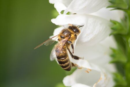 macro photo of bee on white flower
