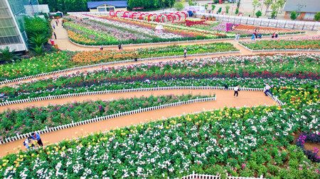 aerial view of Laoyuhe flower sea