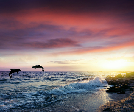 Group of jumping dolphins at sunset. Dolphins jumping. Imagens