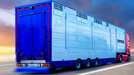 A trailer animal transport. Special truck and trailer for transportation of pigs.