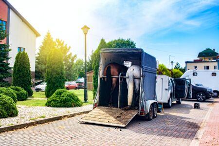 Lustiger Pferdetransport. Kutsche für Pferde auf der Autobahn Standard-Bild
